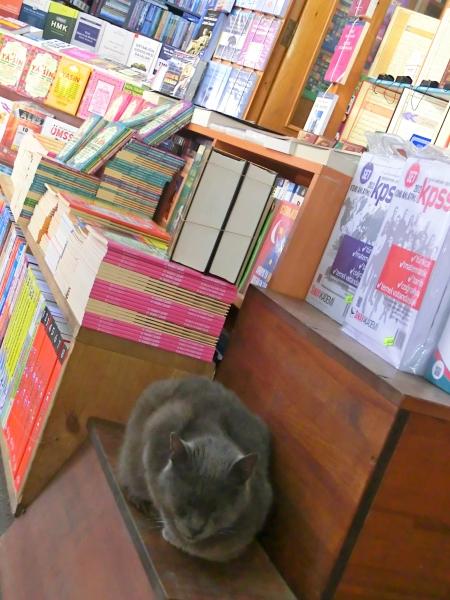 Libri libreria istanbul