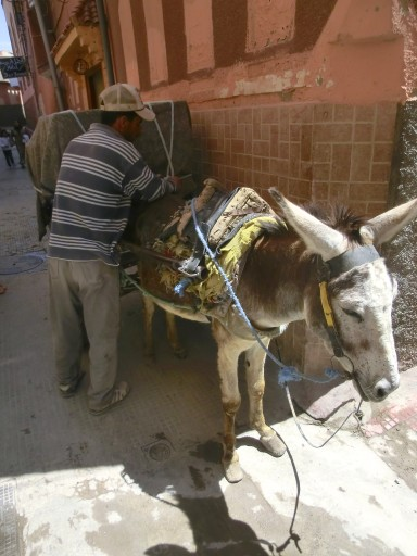 marrakech-asino