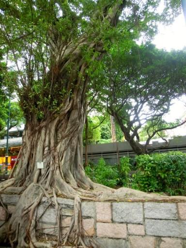 hk-albero