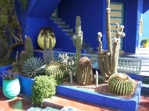 cactus-majorelle