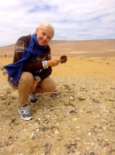 fossili paracas, conchiglie paracas