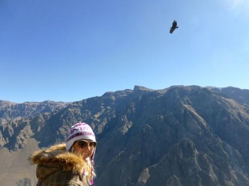 canyon colca, condor perù, cruz del condor