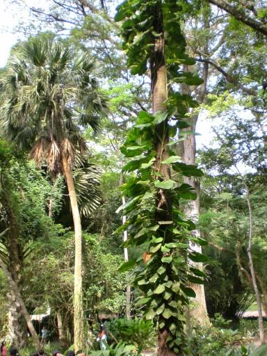 tijuca, foresta rio