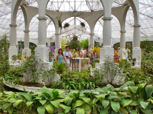 tijuca, foresta rio, orchidee argentina