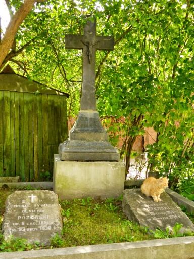 gatti nell'antico cimitero vilnius lituania