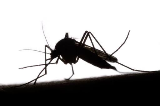 Le malattie trasmesse dalle zanzare