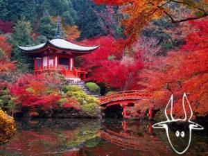 capricorno-kyoto