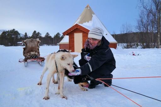 dog sledding Lapponia
