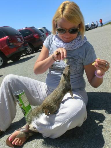 scoiattolo-california-03