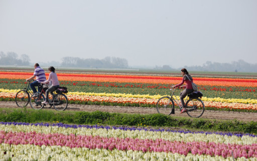 Un must olandese: la bicicletta, tra i tulipani!