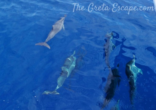 Delfini Filippine