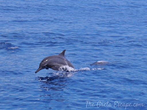 apo island delfini