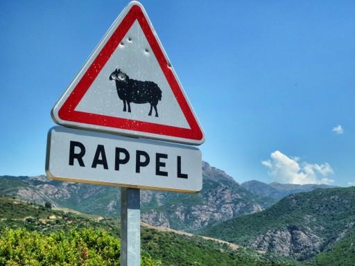 segnale attenzione pecore