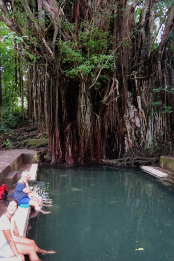Enchained Balete Tree