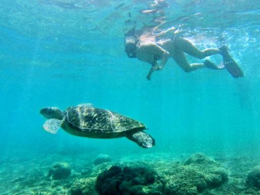 tartarughe filippine