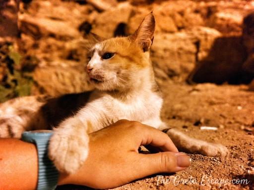 gatto giordano