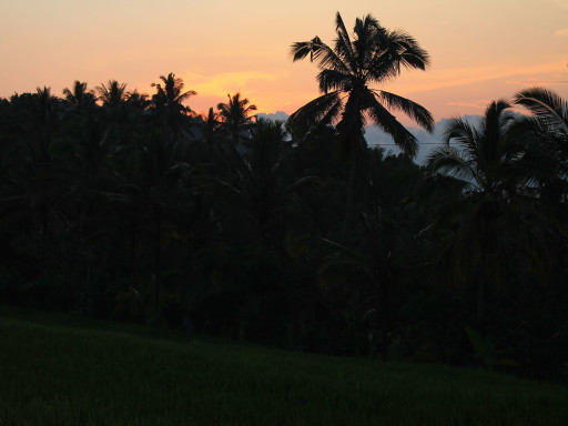 Tramonto tra i campi, il mio primo tramonto a Munduk