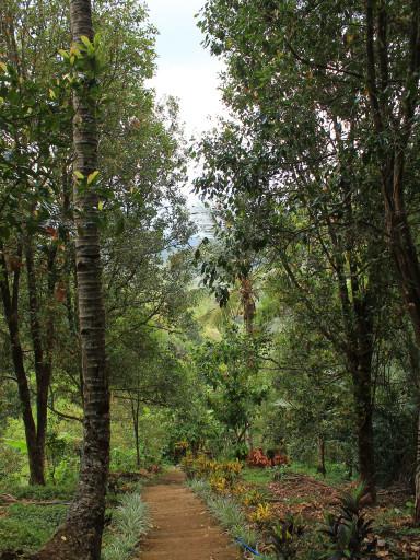 Camminando su e giù per sentieri e scalinate nella foresta pluviale
