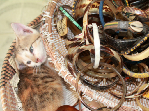 """Un gattino mimetizzato tra bracciali e collanine al mercato """"turistico"""" di Dakar"""