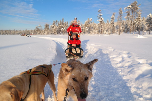 Dog sledding a Saariselka
