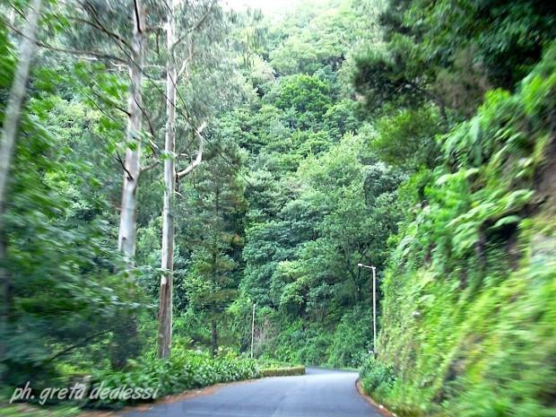 Parco Naturale di Madeira