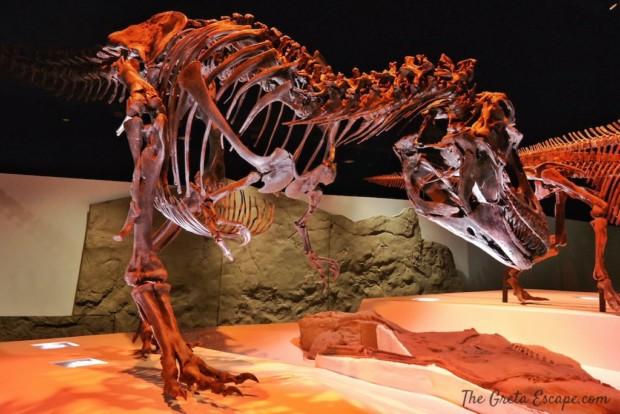 Scheletro di T-Rex