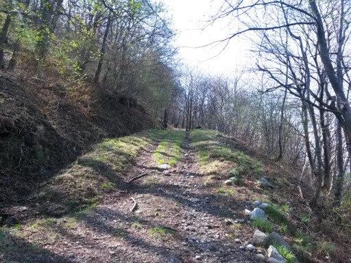 Un susseguirsi di salite, boschi, slarghi, prati erbosi e ruscelli. Questo è trekking!