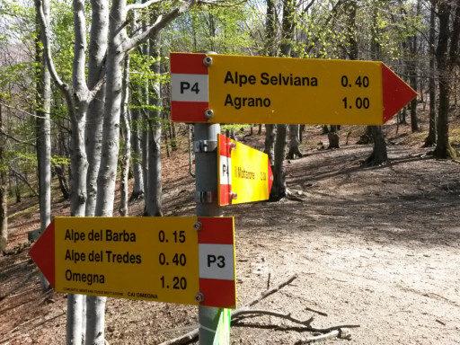 Località Tre Alberi, un trivio importante per il Mottarone, per Agrano o rientro immediato alla base