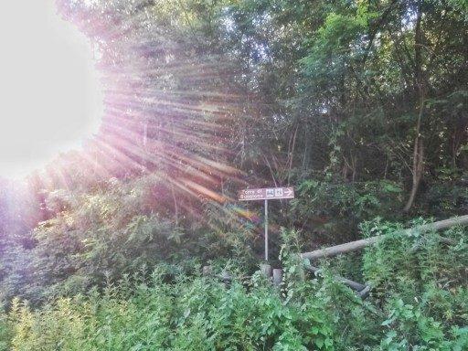 All'ingresso del Parco della Torre di Buccione si è in area protetta e inizia la salita