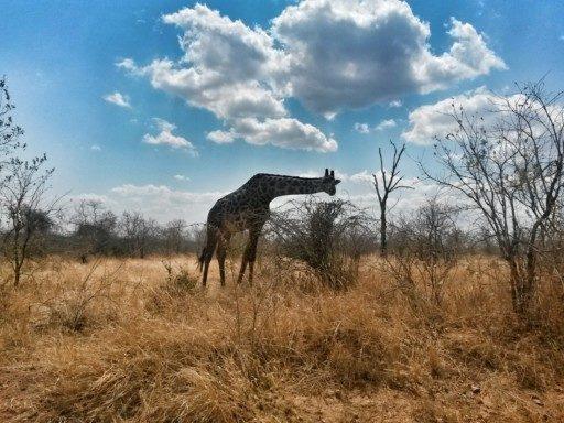 Ho fatto un Safari selvaggio e insolito al Ruaha National Park