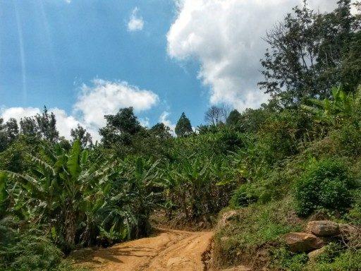 Trekking sulla catena degli Uluguru attraverso la foresta pluviale