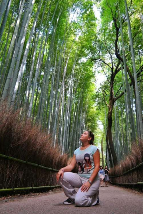 bamboo.forest