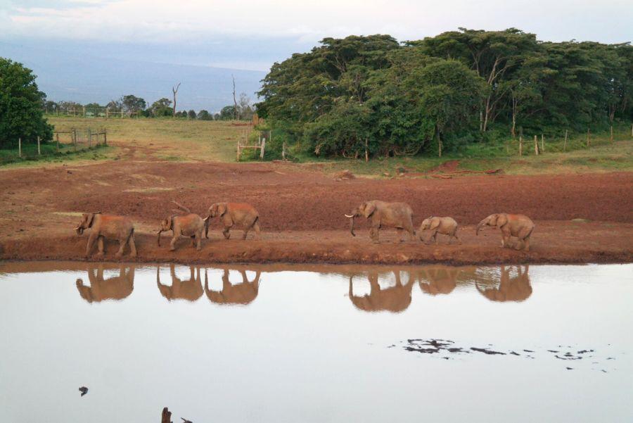 elefanti all'Aberdare