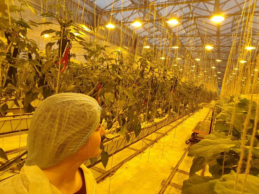 Urban Farmer Den Haag