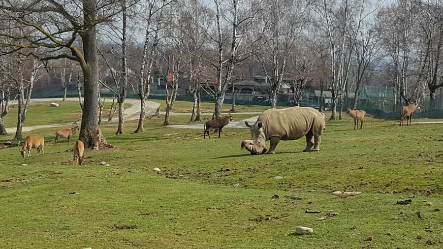 Safari Park Pombia