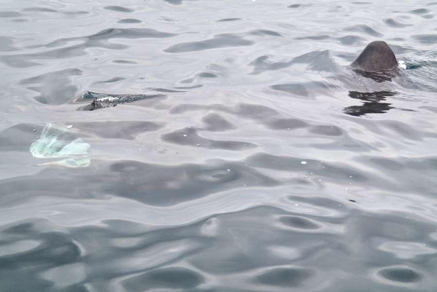 Vasca Da Bagno Balenottera : Whale watching in irlanda la mia esperienza e info utili
