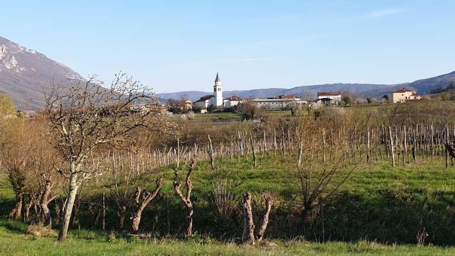 Cantine in Slovenia