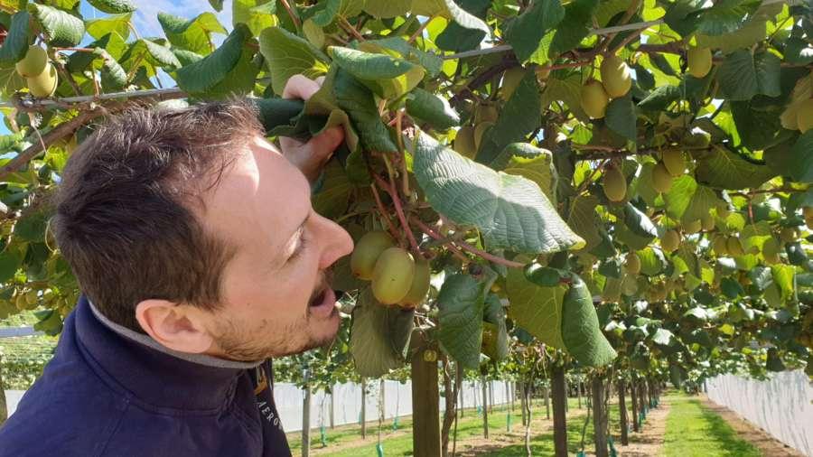 kiwi fruit country