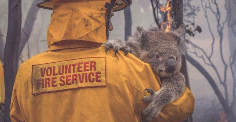 WWF adozione koala